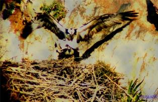 Parc National de Al Hoceima